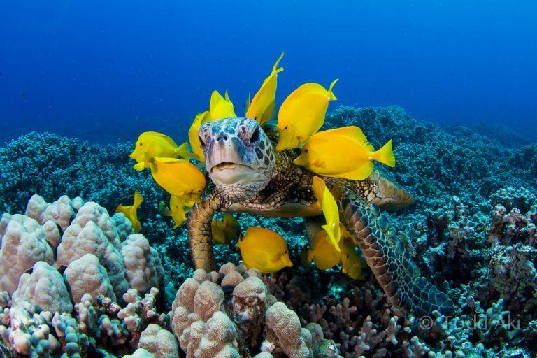 Trabaja en Maldivas cuidando tortugas marinas, una hermosa experiencia