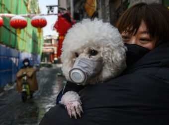Muere primer perro con coronavirus tras cuarentena en HONG KONG