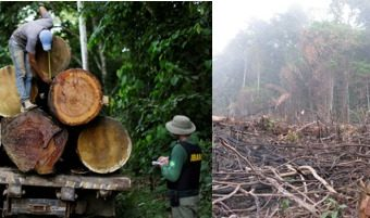 Madereros talan y queman la Selva Amazónica 'Aprovechando La Cuarentena'