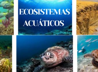 Increible! Conoce sobre los ecosistemas acuáticos y terrestres que se encuentran en el sur y norte del Perú