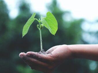 Planta un árbol: