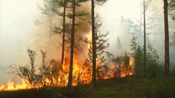 RUSIA: Se queman mas de tres millones de hectáreas en Siberia