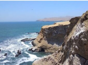 Esta es la fauna marina costera que vive en la Reserva Nacional de Paracas
