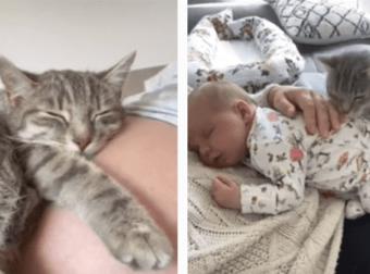 Mujer muestra el tierno vínculo de su gatito con su hijo desde que ella estaba embarazada