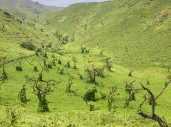 Un Protocolo Verde: una oportunidad para reactivar la economía en armonía con nuestro ambiente