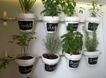 Once plantas medicinales que no deben faltar en casa