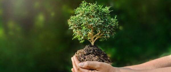 ¿Qué es la ecología? dale click y lee más